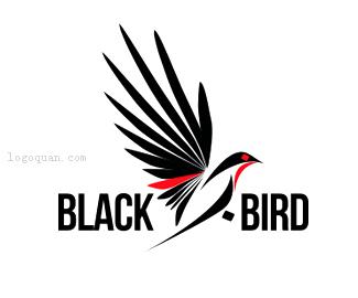 黑鸟摄影团队